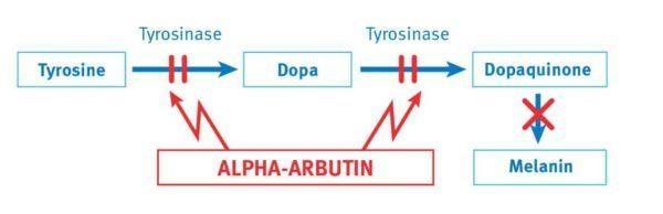 serum alpha arbutin thái lan review