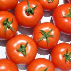 chiết xuất cà chua