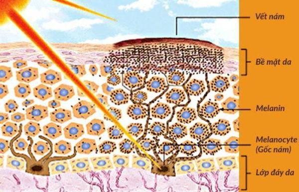 3-O-Ethyl Ascorbic Acid giúp ức chế hình thành melanin