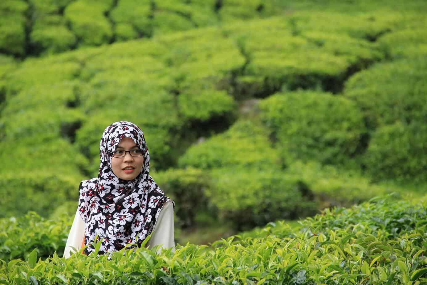 chiết xuất trà xanh chống nắng hiệu quả