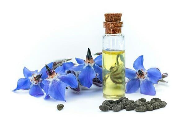 borage oil là chất gì