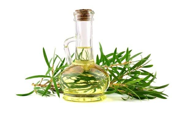 cách sử dụng tinh dầu tràm trà tea tree oil