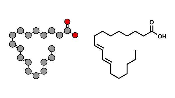 axit linoleic là gì