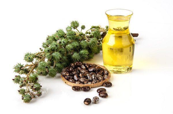 cây thầu dầu có tác dụng gì