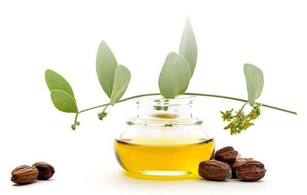 simmondsia chinensis jojoba seed oil
