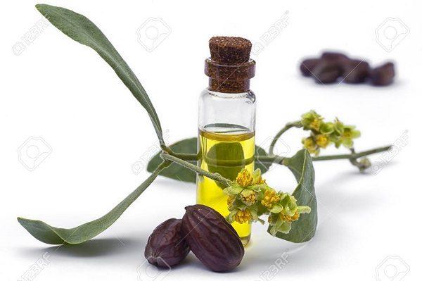 công dụng của simmondsia chinensis seed