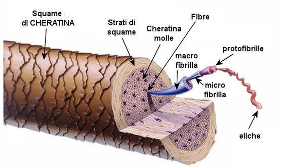 cấu trúc sợi tóc