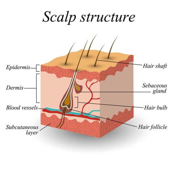 thành phần cấu trúc tóc