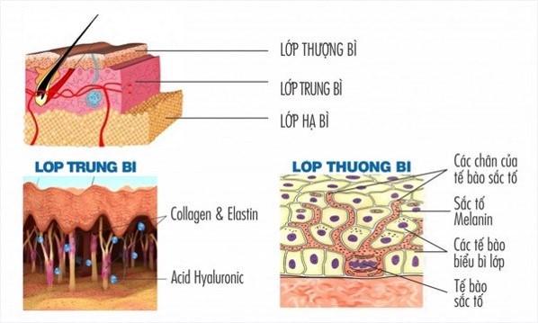 cấu trúc bề mặt da