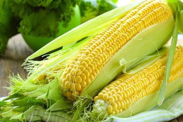chiết xuất hạt bắp