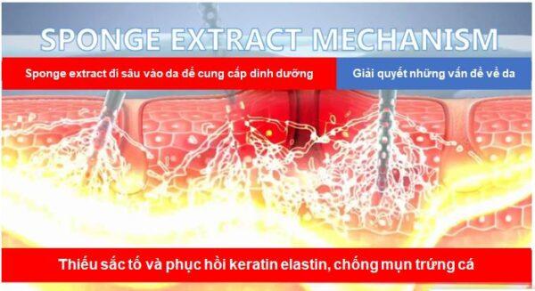 tác dụng cơ chế vi kim tảo biển